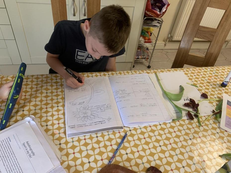 Joe busy working on plants work