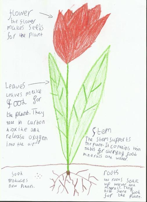 Oliwia's work on labeling flower