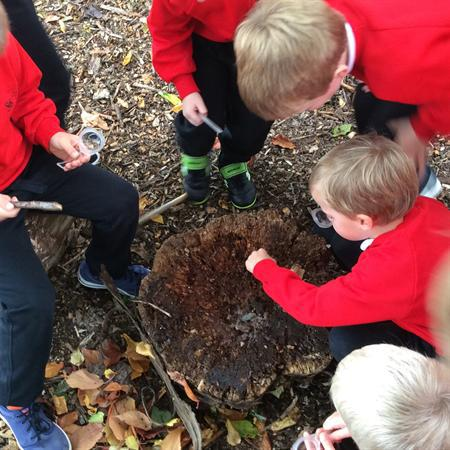 Minibeasts hiding under logs