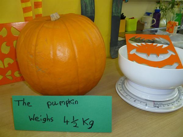 weighing the pumpkin