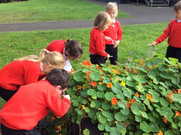 Examining plants with magnifying glasses