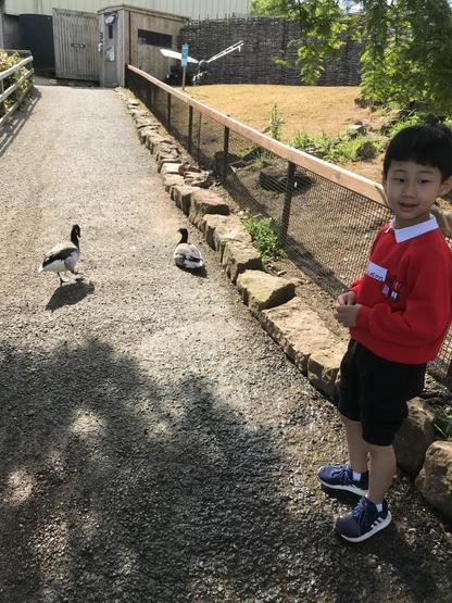We meet our first ducks!
