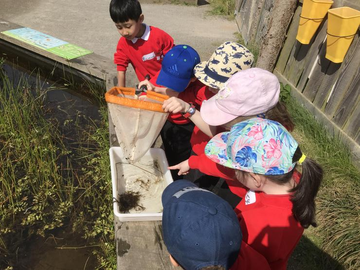 Time for some pond dipping.