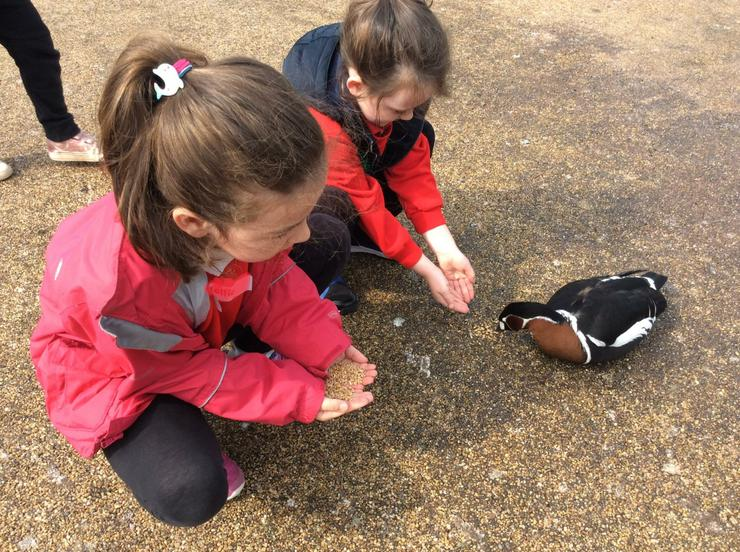 Mollie and Niamh feeding the Red-Breasted goose.