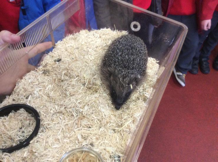 A prickly hedgehog