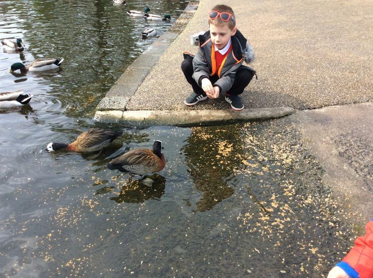 Come here ducks.