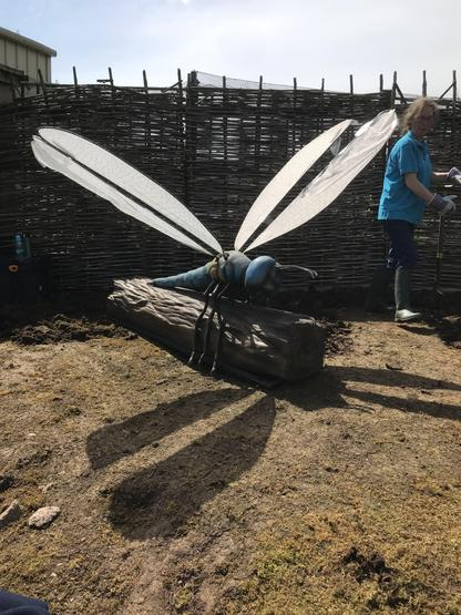Wow! What a big dragonfly!