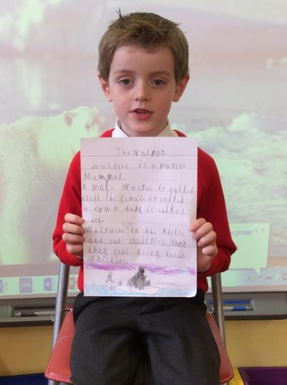 We learned lots of new facts about a walrus.