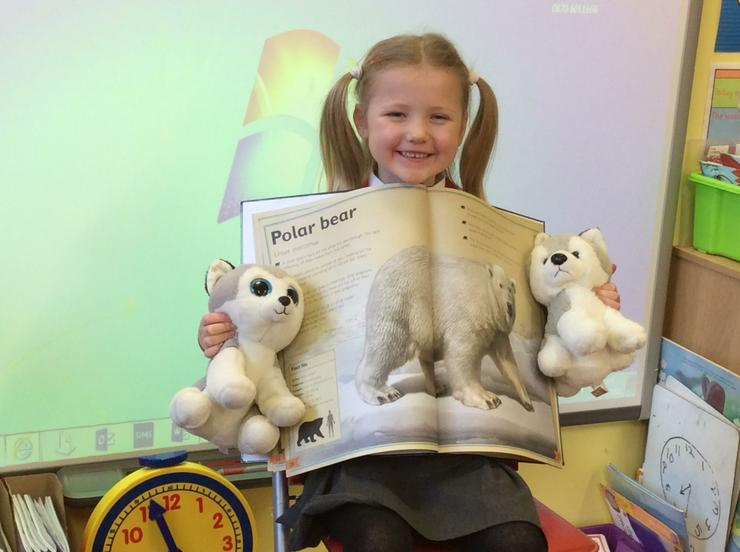 We learned ots more about polar bears and huskies