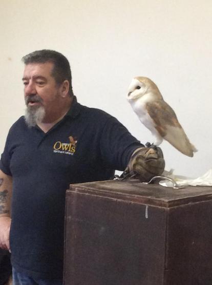 We met a little barn owl