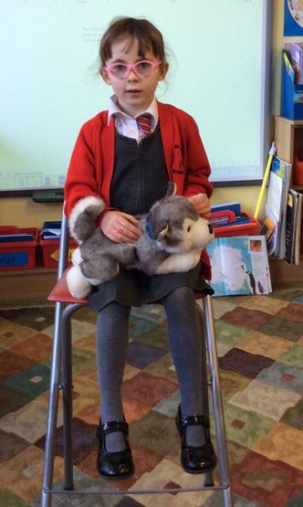 A super Show and Tell about husky dogs
