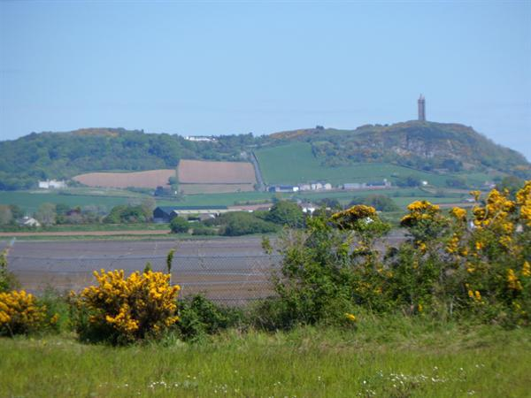 Scrabo Tower in the distance