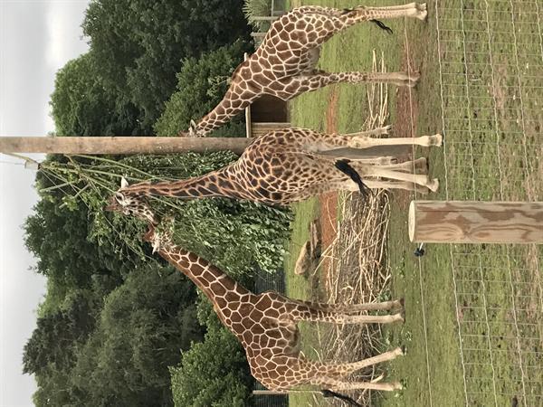 Yorkshire Wildlife Park Trip