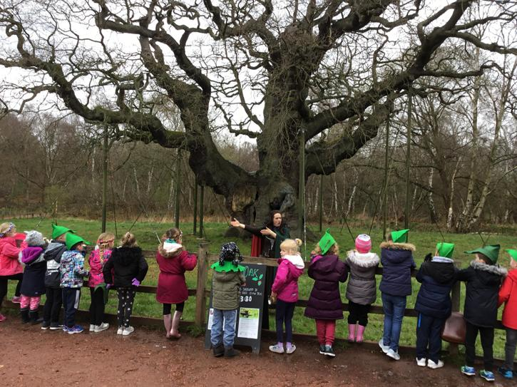 The Major Oak!
