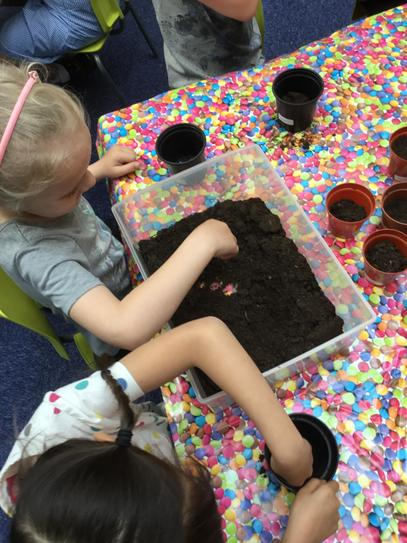 Year 1b Planting Sunflowers