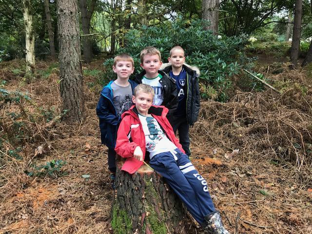 Holt Hall 2017  Woodland Walk