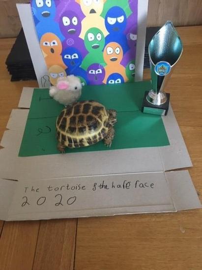 Jed's Tortoise winning the race!