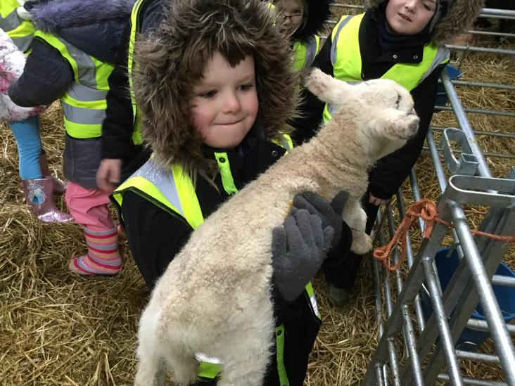 Declan was surprised how heavy the lambs were.
