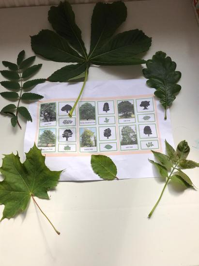 Identifying Leaves by Regan