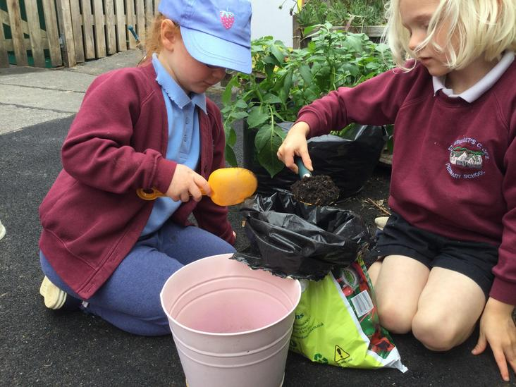 Planting a bean stalk