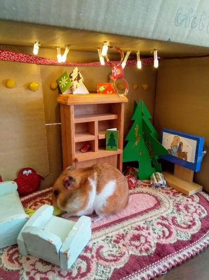 Naomi's hamster enjoying the  Minaiture World