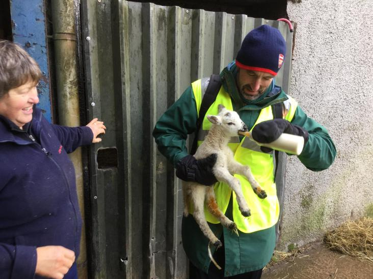 Mr Spencer feeds one of the pet lambs.