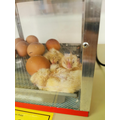 We now have 3 chicks! 1 boy and 2 girls