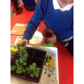 We planted garden flowers for all our tables.