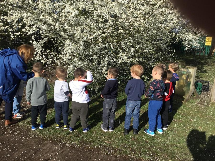 Looking at the Blossom