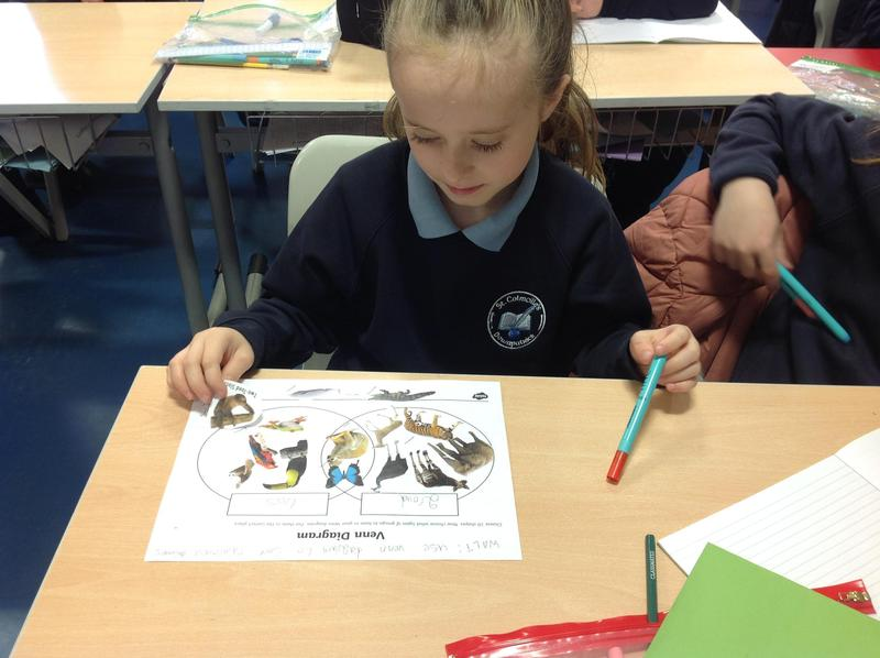 We sorted rainforest animals using a Venn diagrams.