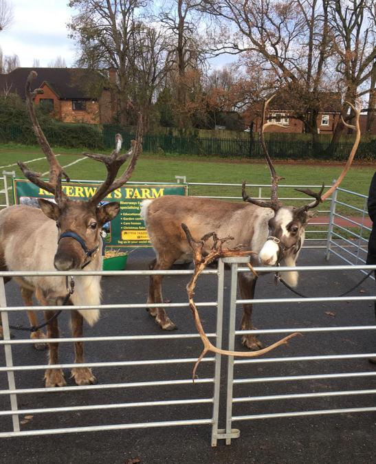 Reindeer Visit from Riverways Farm Dec 20