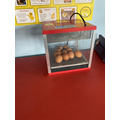The eggs arrived and we put them in an incubator to keep them warm.