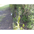 New shrubs and bushes to complete our hedgerow.