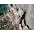 The old log pile is breaking down nicely with lots of mini beasts inside.