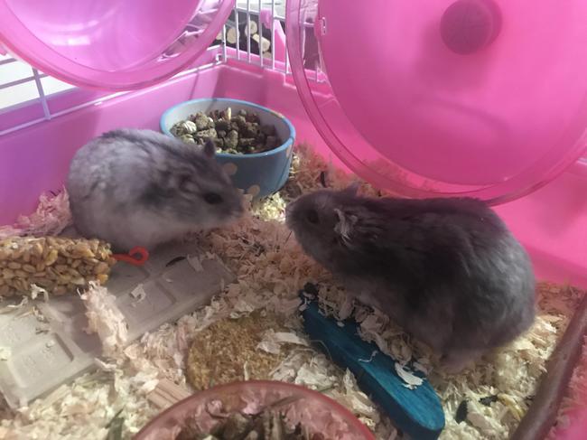 """Hector and Buster say """"hi everyone!"""""""