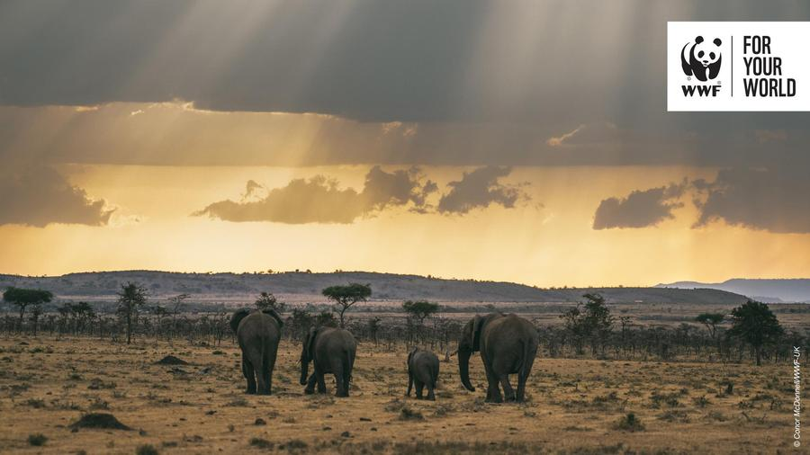 Image provided by WWF