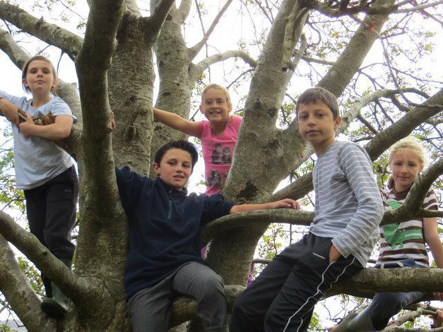 magic tree at Snowdonia