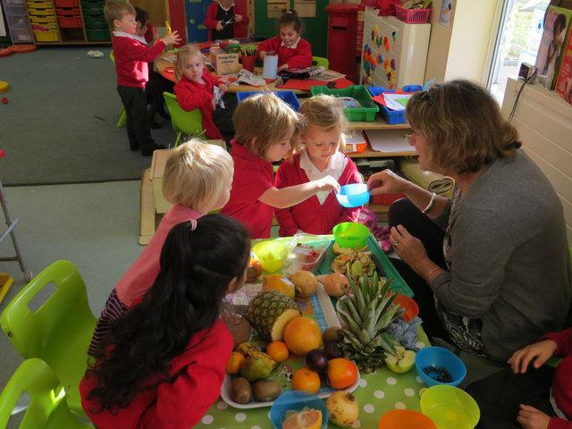 Investigating new fruits in Nursery