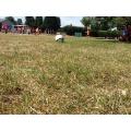 UKS2 Football