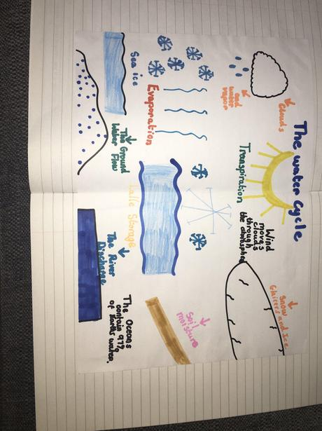 Amelia's Water Cycle