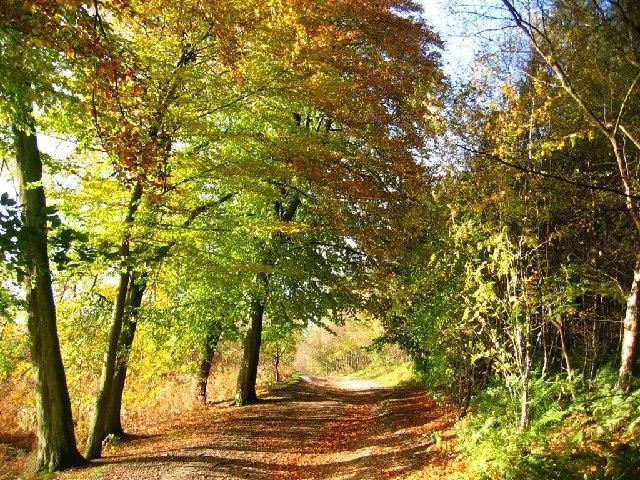 Beautiful walking trails