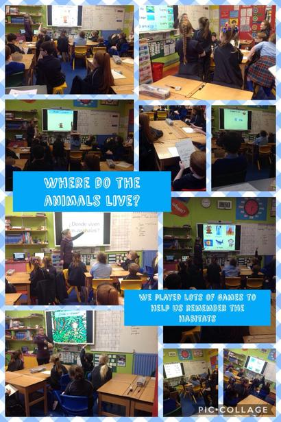 Using our oracy skills to discuss habitats