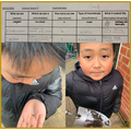 Science - Invertebrate bug hunt