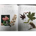 Albert's plant study