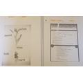 Sara - Science and English