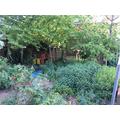 Our wild jungle garden
