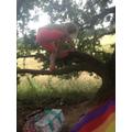 Climbing a tree and enjoying a picnic