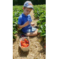 Josh enjoyed strawberry picking.
