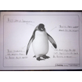 A great penguin fact file - with great presentation!