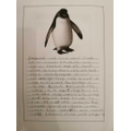 Jessica has written an informative fact file on penguins.